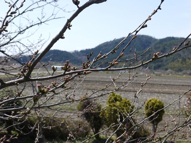 2018_桜