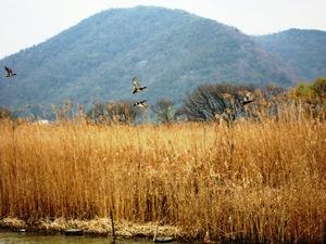 2010鴨.jpg