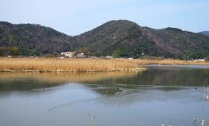 20130324_カモ.jpg