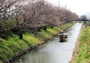 20130330_桜_02.jpg