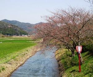 20130330_桜_03.jpg