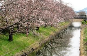 20130401_桜_02.jpg