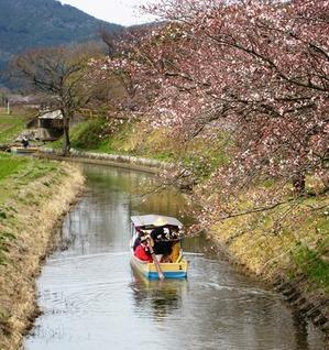 20130401_桜_03.jpg