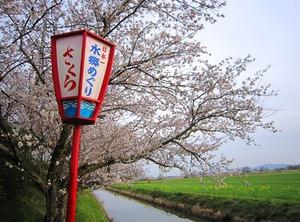 20130404_桜_02.jpg