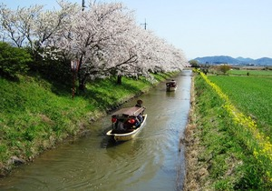 20130412_桜_01.jpg