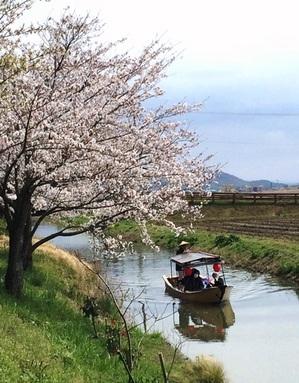 20140405_桜_06.jpg